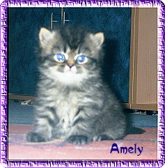 amely3